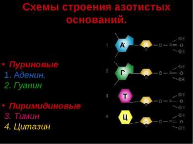Схемы строения азотистых оснований. В состав ДНК входят следующие азотистые о...