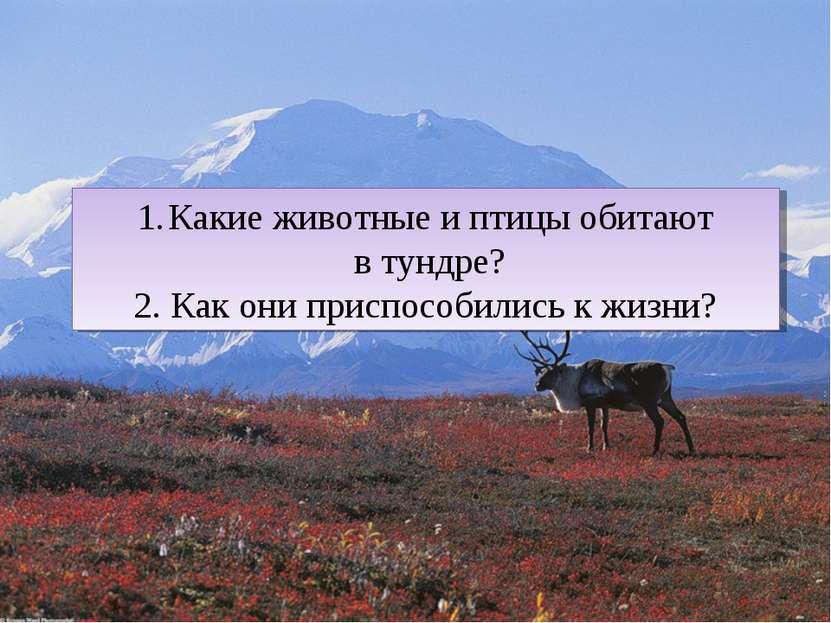 Какие животные и птицы обитают в тундре? 2. Как они приспособились к жизни?