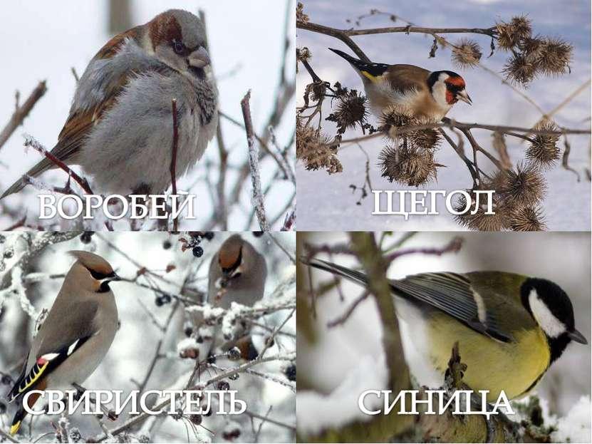По-весеннему начинают петь птицы, которые пережили долгую, голодную зиму.