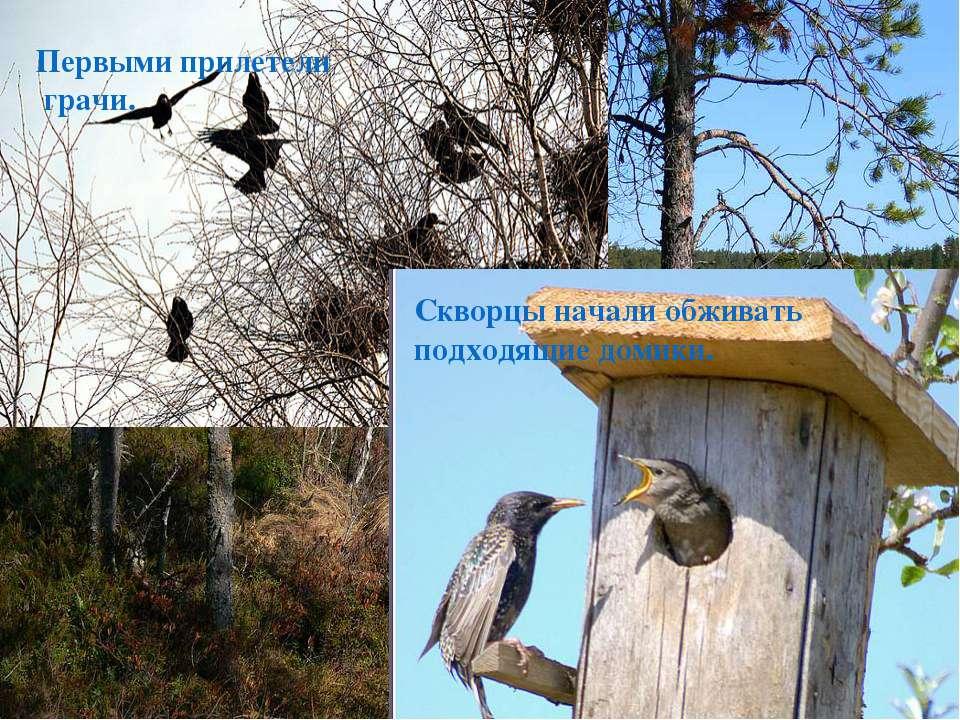 Запели на разные голоса, на разные тембры перелетные птицы, проделав долгий п...