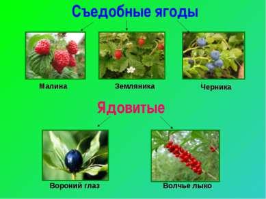 Ядовитые Съедобные ягоды Малина Земляника Черника Вороний глаз Волчье лыко