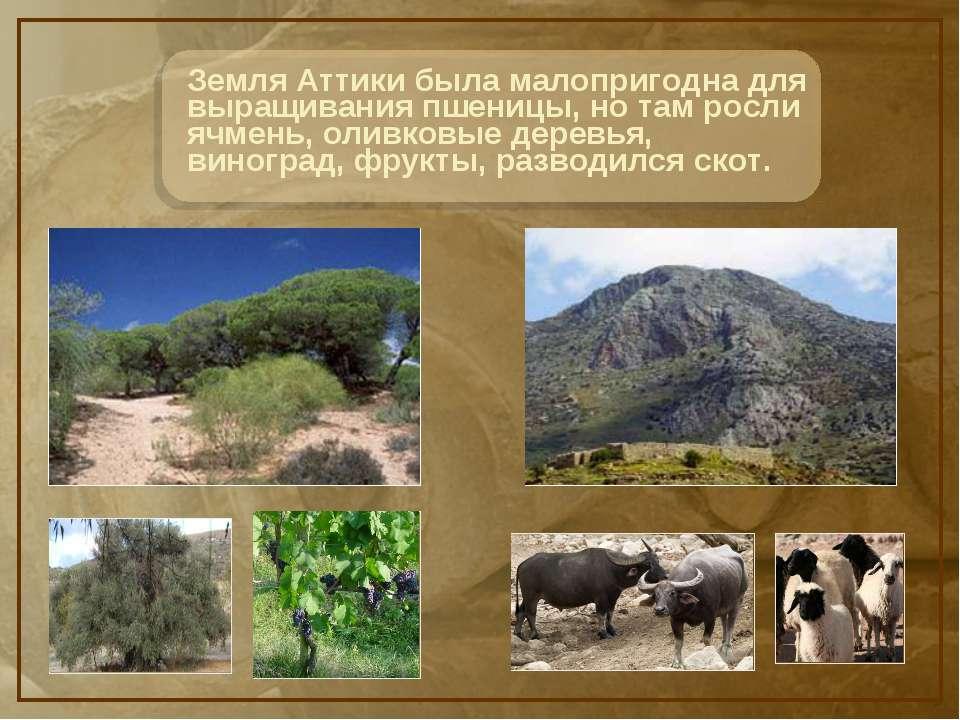 Что выращивали на склонах гор древние греки