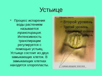 Устьице Процесс испарения воды растением называется транспирация. Интенсивнос...