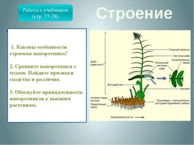 Строение Папоротниковидные – отдел высших растений, известный с девона. В отл...