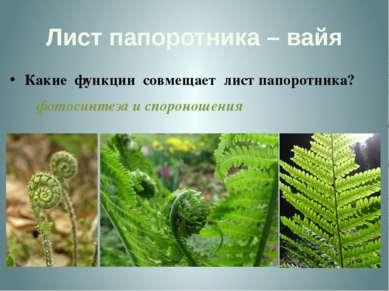 Лист папоротника – вайя Какие функции совмещает лист папоротника? фотосинтеза...