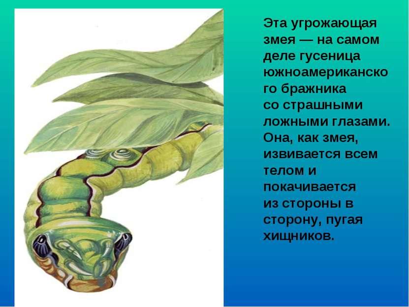 Эта угрожающая змея — на самом деле гусеница южноамериканского бражника сост...