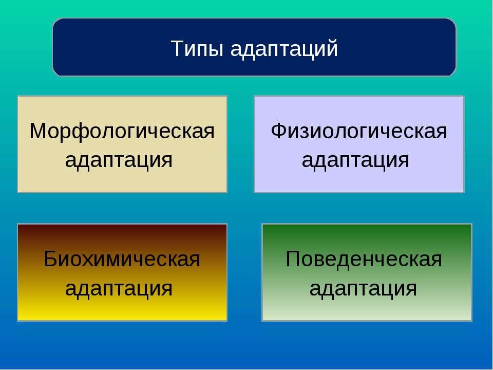 Типы адаптаций Морфологическая адаптация Биохимическая адаптация Физиологичес...