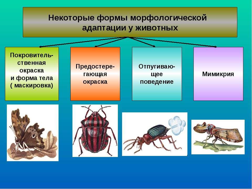 Некоторые формы морфологической адаптации у животных Покровитель- ственная ок...