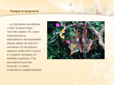 Рекорд по вонючести …установили малайские голые бульдоговые летучие мыши. Их ...