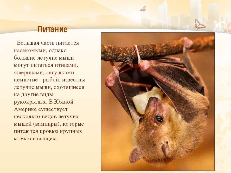 Питание Большая часть питается насекомыми, однако большие летучие мыши могут ...