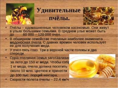 Удивительные пчёлы. Пчёлы – одомашненные человеком насекомые. Они живут в уль...