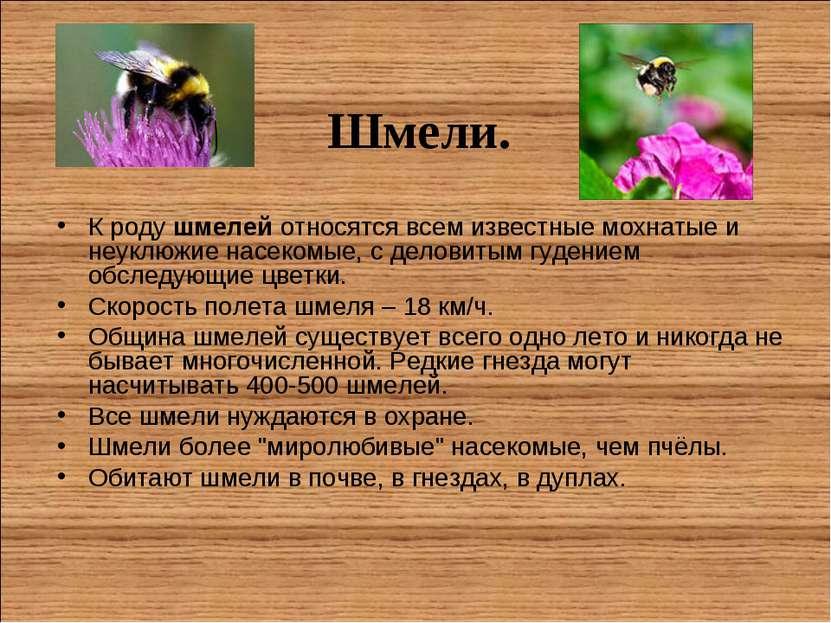 Шмели. К родушмелей относятся всем известные мохнатые и неуклюжие насекомые,...