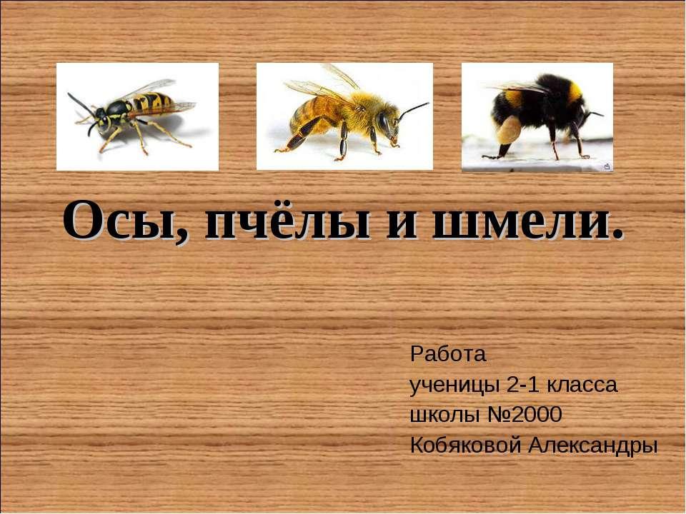 Осы, пчёлы и шмели. Работа ученицы 2-1 класса школы №2000 Кобяковой Александры
