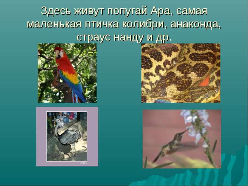 Здесь живут попугай Ара, самая маленькая птичка колибри, анаконда, страус нан...