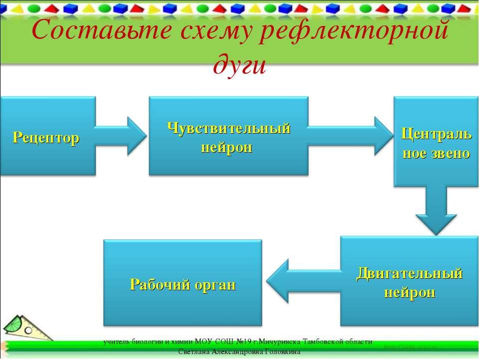 Составьте схему рефлекторной дуги учитель биологии и химии МОУ СОШ №19 г.Мичу...
