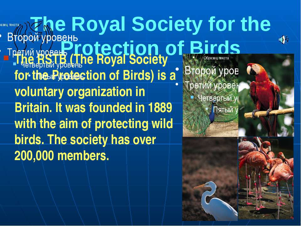 The Royal Society for the Protection of Birds The RSTB (The Royal Society for...