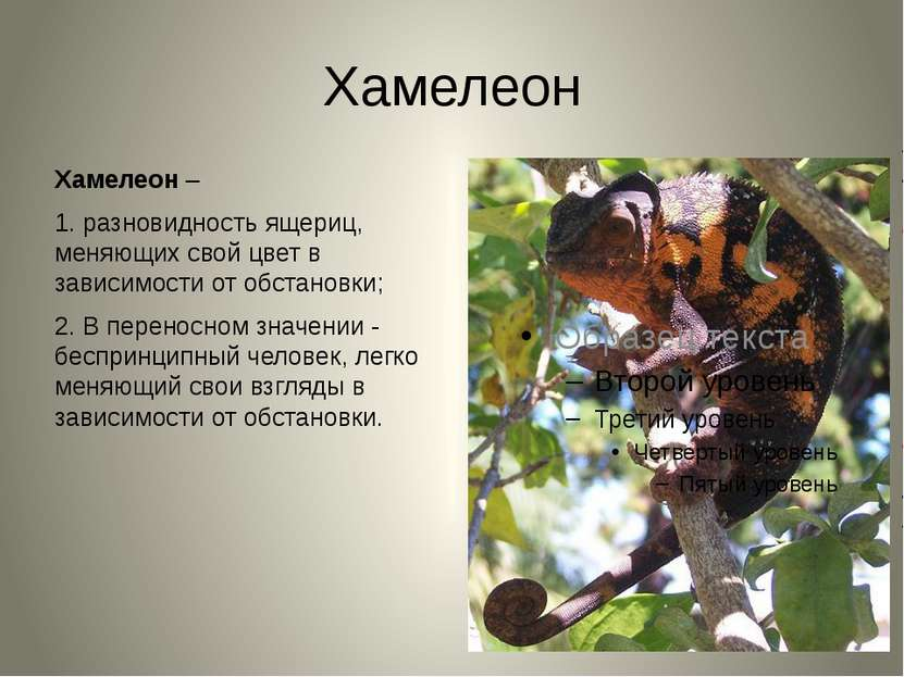 Хамелеон Хамелеон– 1. разновидность ящериц, меняющих свой цвет в зависимости...