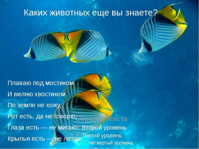 Каких животных еще вы знаете? Плаваю под мостиком И виляю хвостиком. По земл...