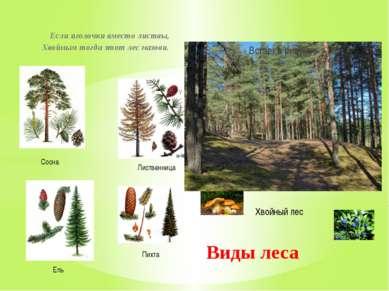 Если иголочки вместо листвы, Хвойным тогда этот лес назови. Виды леса Хвойный...