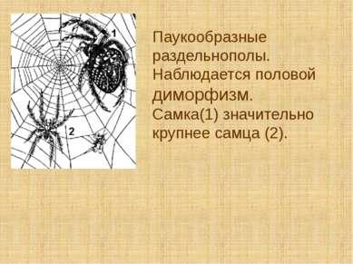 Паукообразные раздельнополы. Наблюдается половой диморфизм. Самка(1) значител...