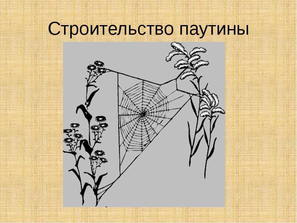 Строительство паутины
