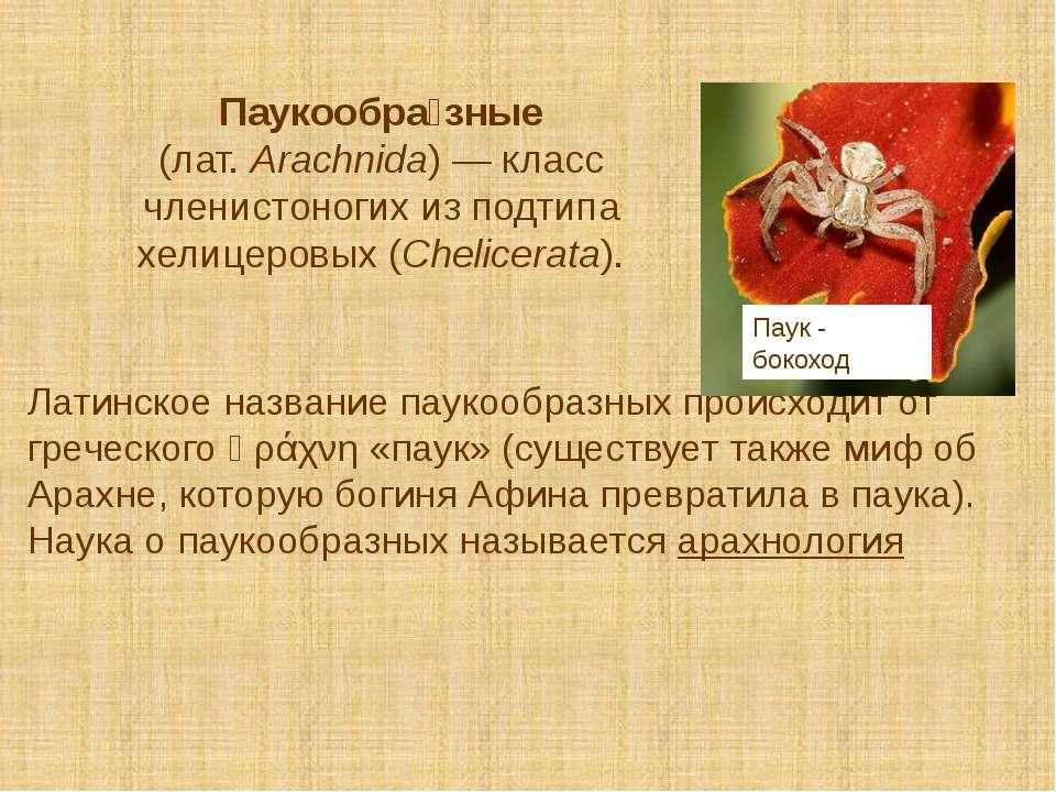 Паукообра зные (лат.Arachnida)— класс членистоногих из подтипа хелицеровых ...