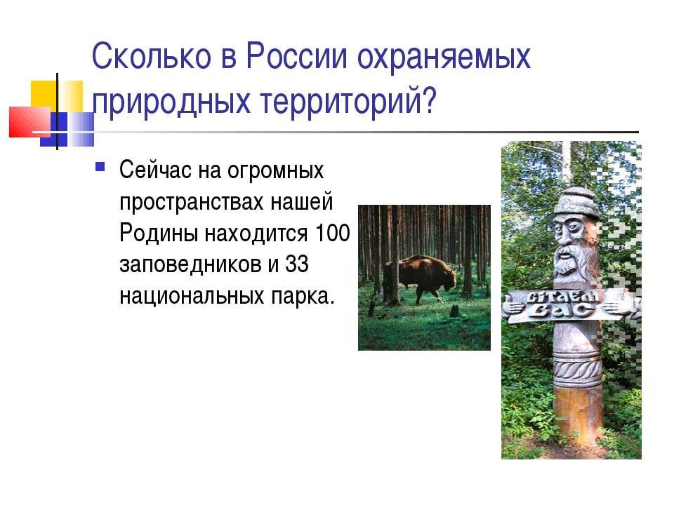 Сколько в России охраняемых природных территорий? Сейчас на огромных простран...