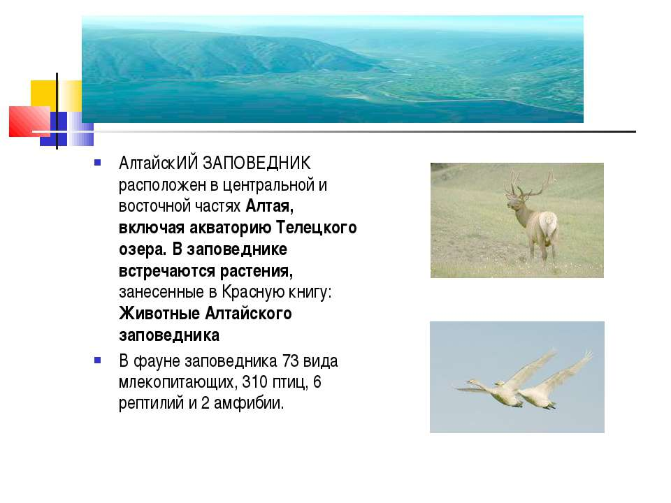 АлтайскИЙ ЗАПОВЕДНИК расположен в центральной и восточной частях Алтая, включ...