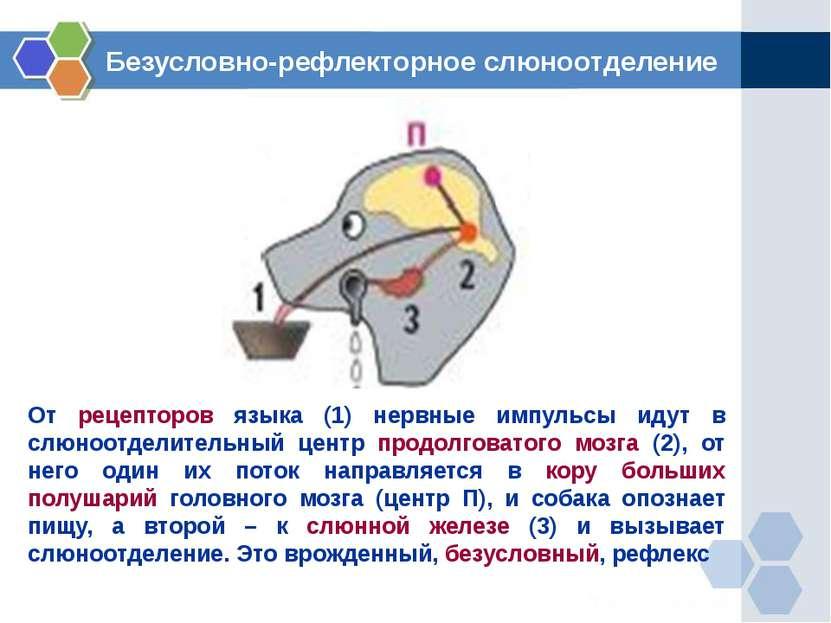 От рецепторов языка (1) нервные импульсы идут в слюноотделительный центр прод...