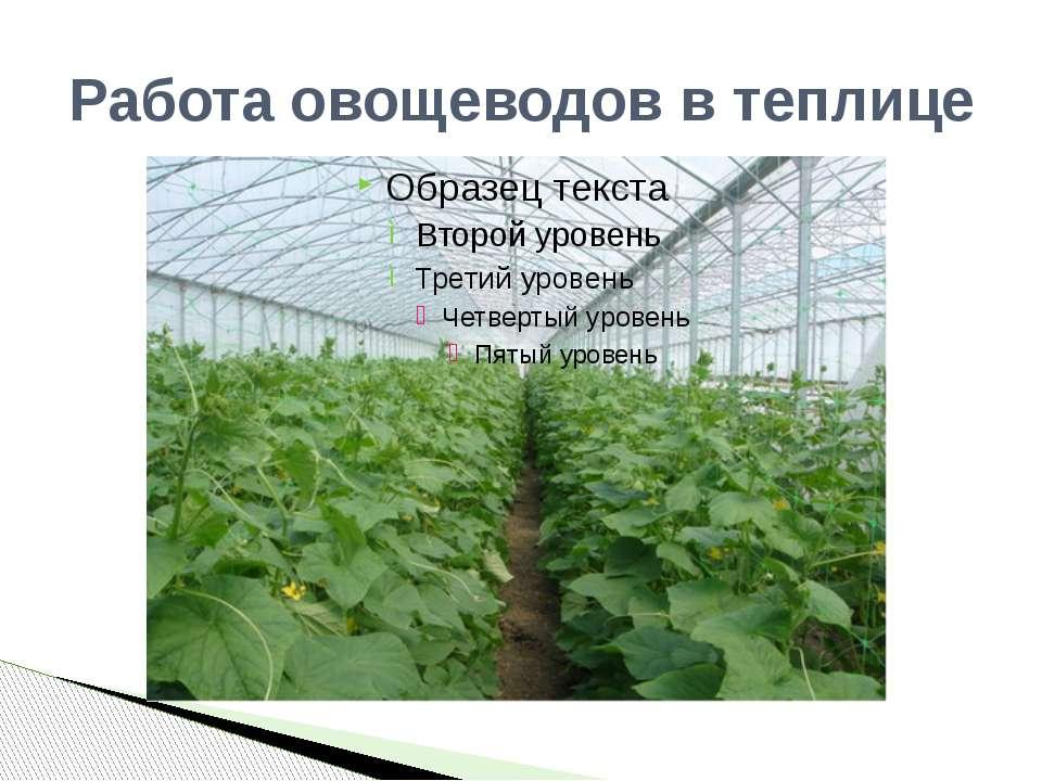 Работа овощеводов в теплице