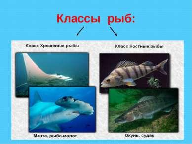 Классы рыб: