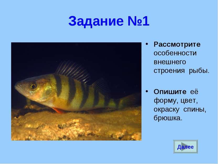 Задание №1 Рассмотрите особенности внешнего строения рыбы. Опишите её форму, ...