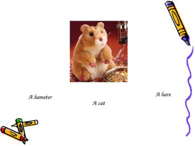 A hamster A cat A hare