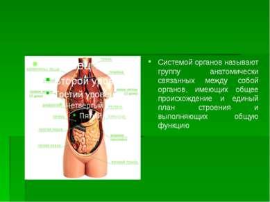 Системой органов называют группу анатомически связанных между собой органов, ...