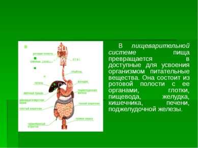 В пищеварительной системе пища превращается в доступные для усвоения организм...