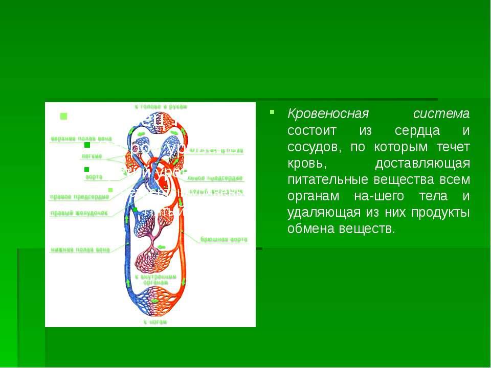 Кровеносная система состоит из сердца и сосудов, по которым течет кровь, дост...