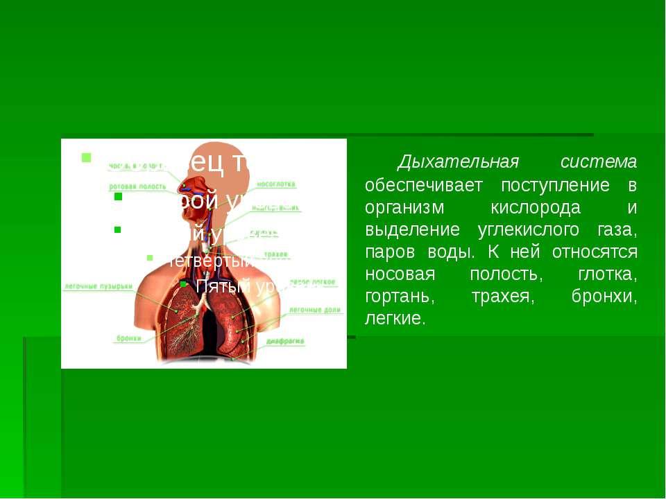 Дыхательная система обеспечивает поступление в организм кислорода и выделение...
