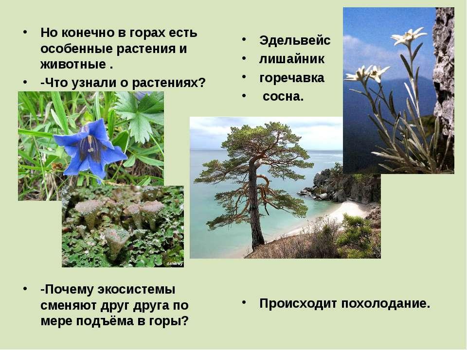 Но конечно в горах есть особенные растения и животные . -Что узнали о растени...