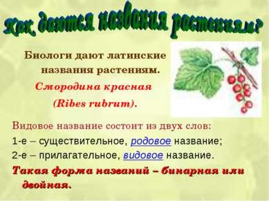 Биологи дают латинские названия растениям. Смородина красная (Ribes rubrum). ...