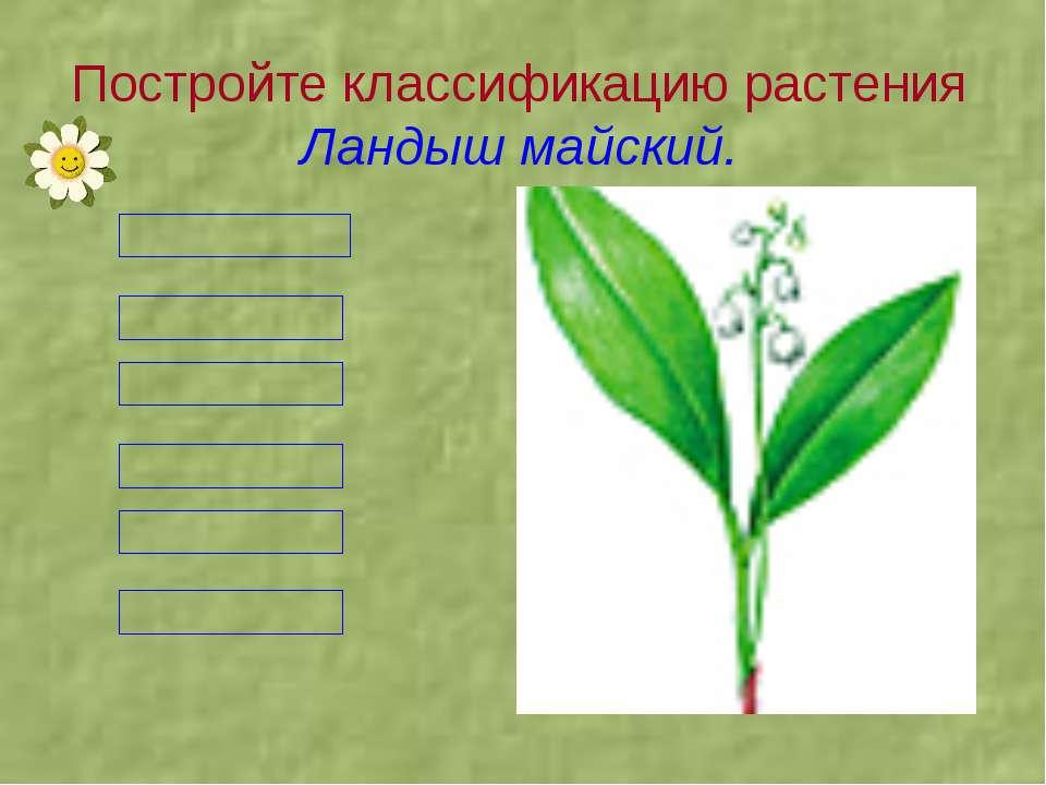 Постройте классификацию растения Ландыш майский.