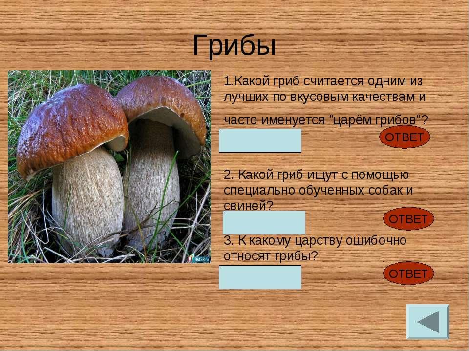 Грибы Какой гриб считается одним из лучших по вкусовым качествам и часто имен...