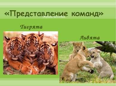 Львята Тигрята