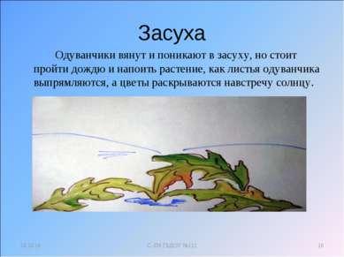 Засуха Одуванчики вянут и поникают в засуху, но стоит пройти дождю и напоить ...