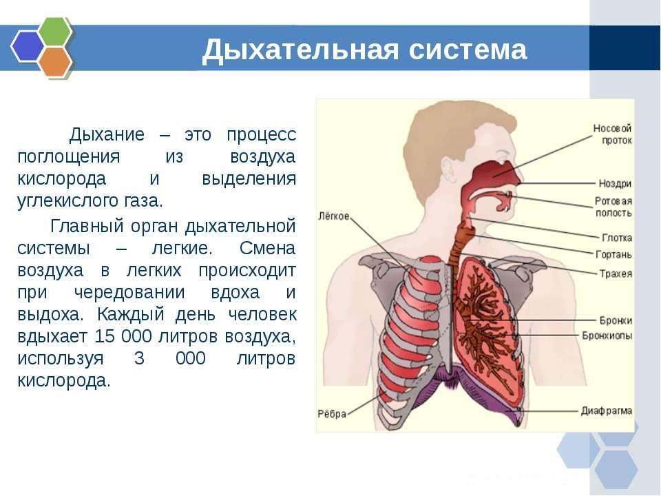 Дыхание – это процесс поглощения из воздуха кислорода и выделения углекислого...