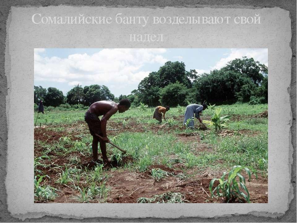 Сомалийские банту возделывают свой надел