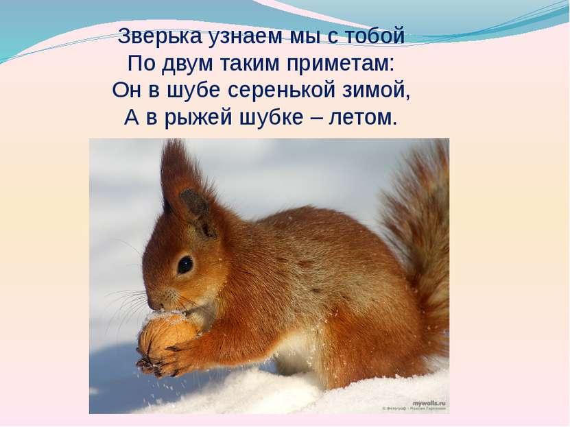 Зверька узнаем мы с тобой По двум таким приметам: Он в шубе серенькой зимой, ...