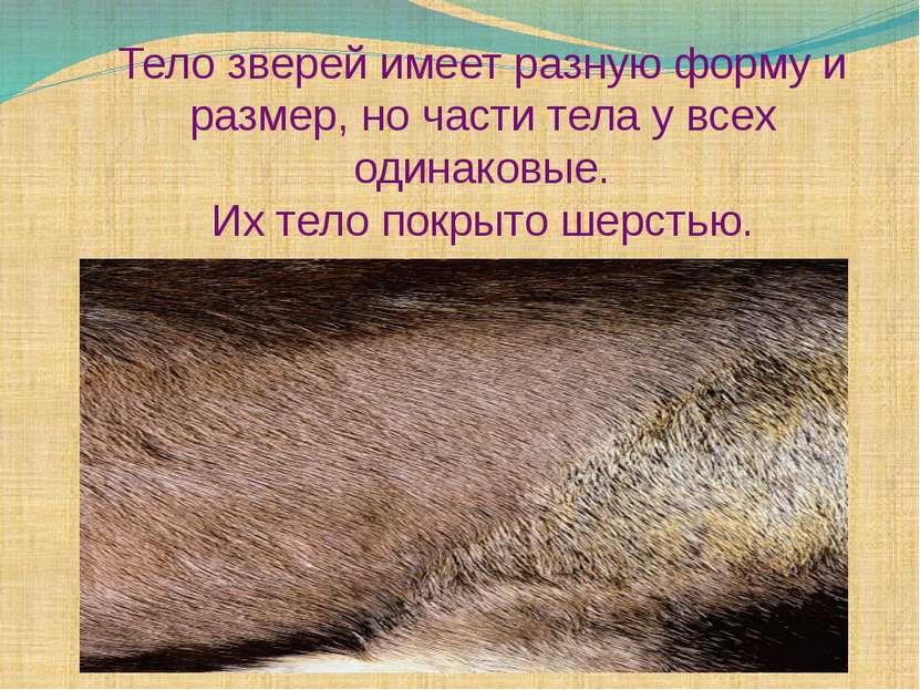 Тело зверей имеет разную форму и размер, но части тела у всех одинаковые. Их ...