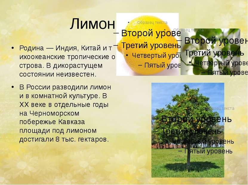 Лимон. Родина—Индия,Китайитихоокеанскиетропическиеострова. В дикорасту...