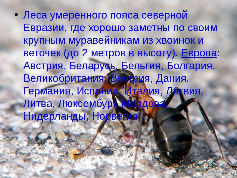 Леса умеренного пояса северной Евразии, где хорошо заметны по своим крупным м...