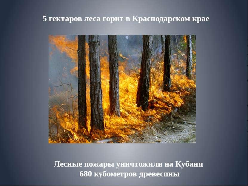 Лесные пожары уничтожили на Кубани 680 кубометров древесины 5 гектаров леса г...